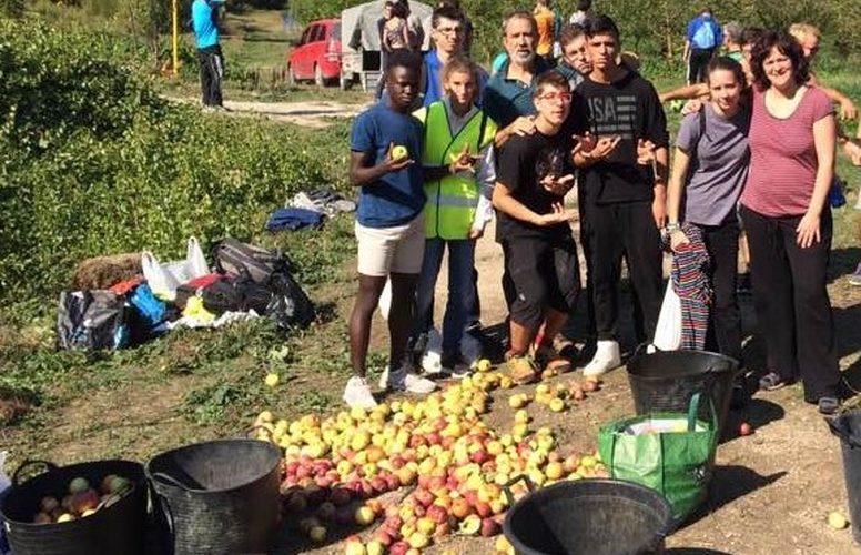 Recogida de Manzanas